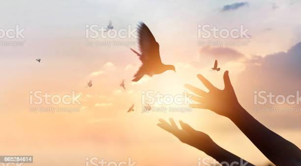Photo of Woman praying and free bird enjoying nature on sunset background, hope concept