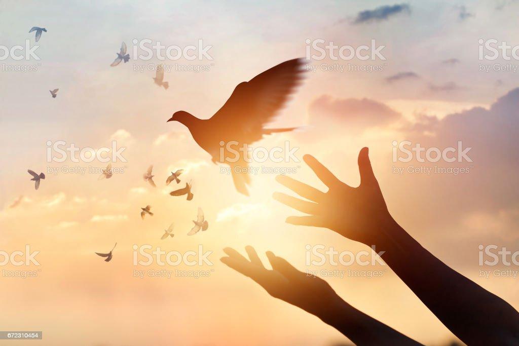 Woman praying and free bird enjoying nature on sunset background, hope concept royalty-free stock photo