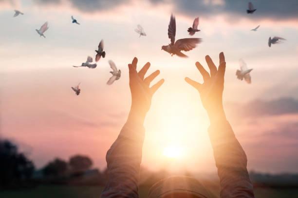 Woman praying and free bird enjoying nature on sunset background hope picture id846216846?b=1&k=6&m=846216846&s=612x612&w=0&h=cvmd35 jlnxv6dbsrgid86kymo6za2paa1ehoapcqzc=