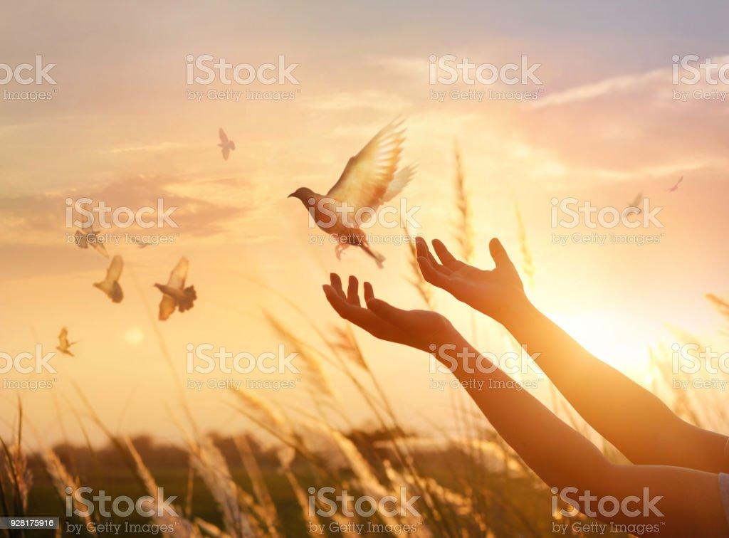 Femme libre et priant oiseau profiter de la nature sur fond de coucher de soleil, concept de l'espoir photo libre de droits