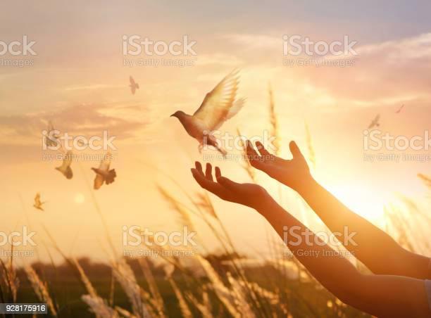 Woman praying and free bird enjoying nature on sunset background hope picture id928175916?b=1&k=6&m=928175916&s=612x612&h=hyvggt7sluz sfxxh tppiemhxpgdxyzg i3bnzfesy=