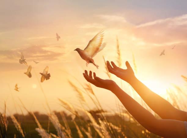 Woman praying and free bird enjoying nature on sunset background hope picture id928175916?b=1&k=6&m=928175916&s=612x612&w=0&h=k d3fahtagr6hwshni9r 6alozmm4vdq6zqcmiz3lfa=