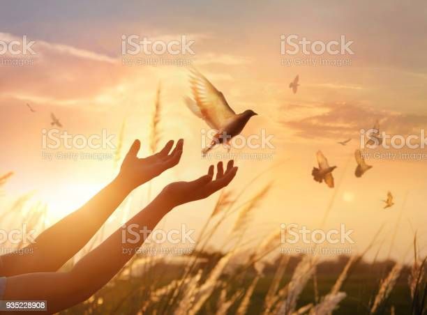 Woman praying and free bird enjoying nature on sunset background hope picture id935228908?b=1&k=6&m=935228908&s=612x612&h= zffuaandlico 8 78v 1l z6bh66yf84kfxdfuhzrg=