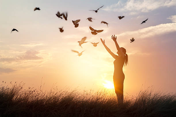 woman praying and free bird enjoying nature on sunset background - liberté photos et images de collection