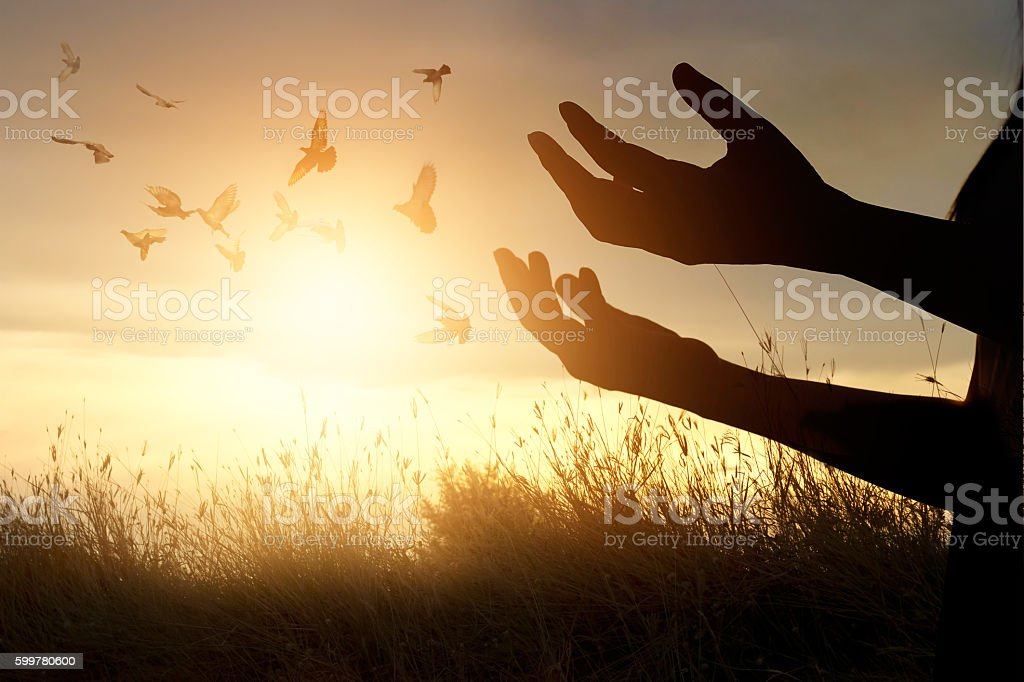Woman praying and free bird enjoying nature on sunset background stock photo
