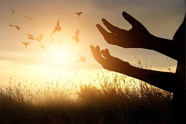 woman praying and free bird enjoying nature on sunset background - religionsfreiheit stock-fotos und bilder