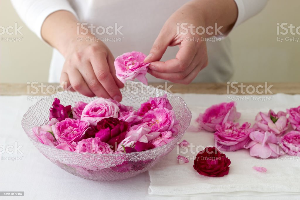 A woman prepares jam from roses, ingredients for jam from roses. Rustic style. - Royalty-free Adult Stock Photo