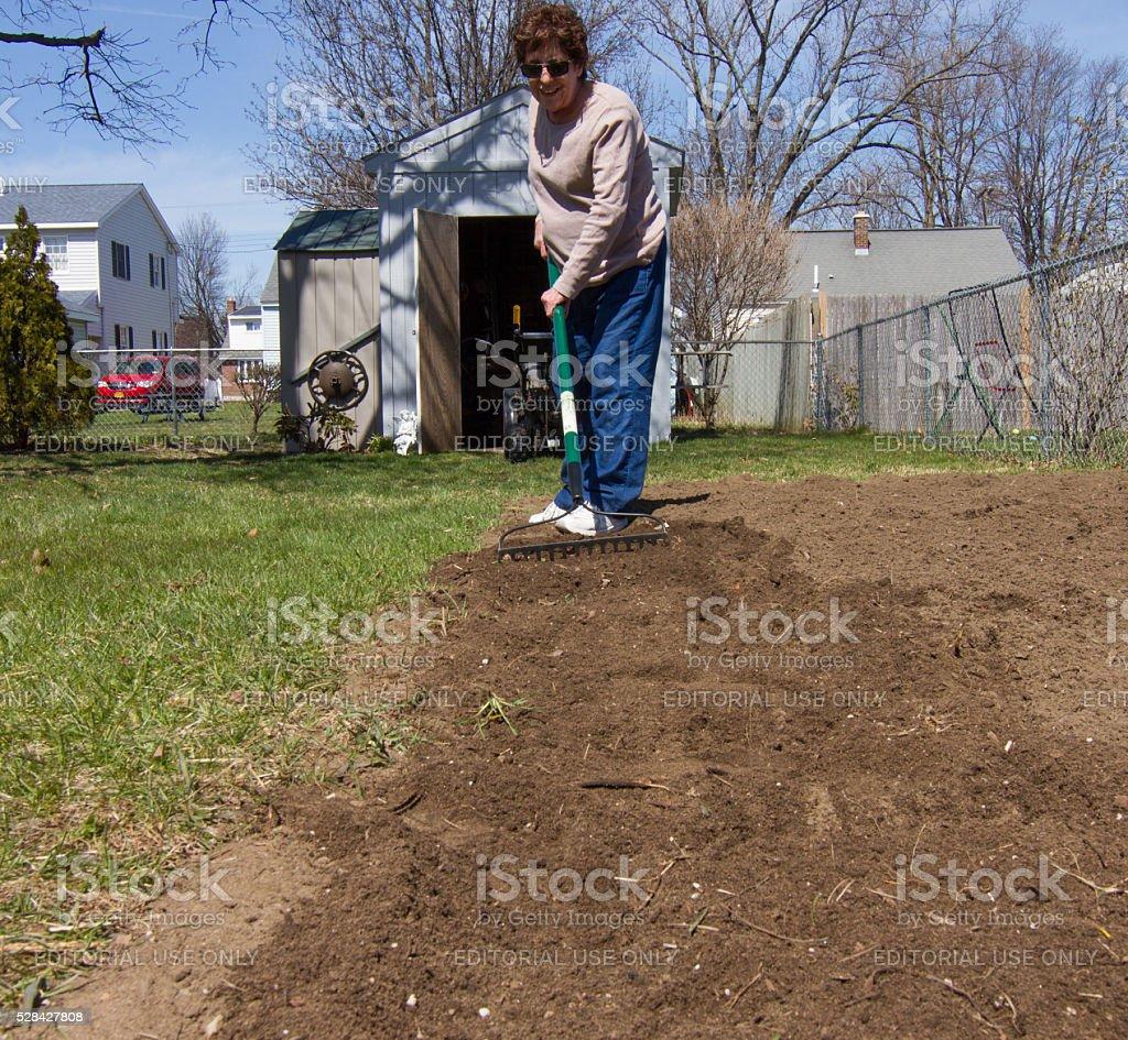 Woman preparing garden with rake stock photo