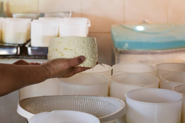 Woman producing cheese stock photo