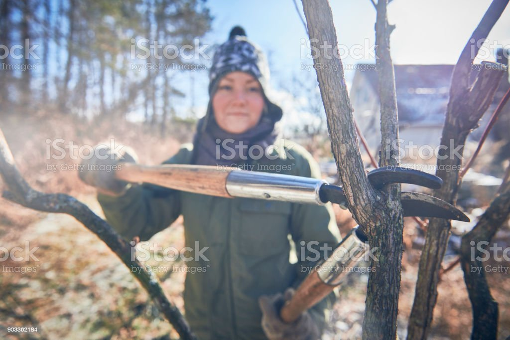 Woman pruning her blueberry bushes stock photo