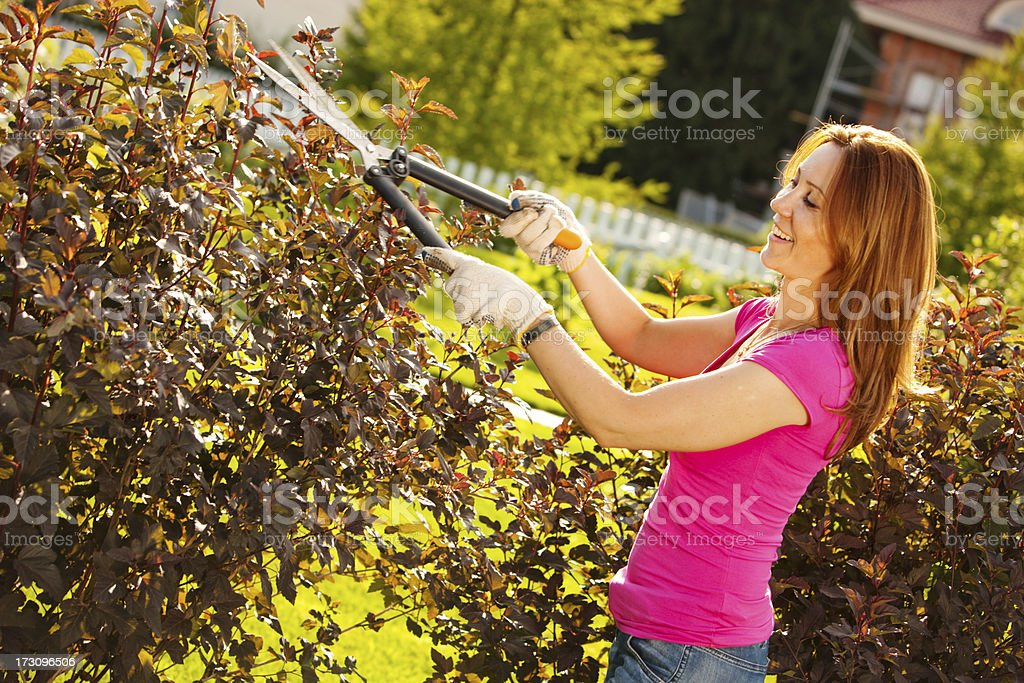 Woman Pruning plants in garden stock photo