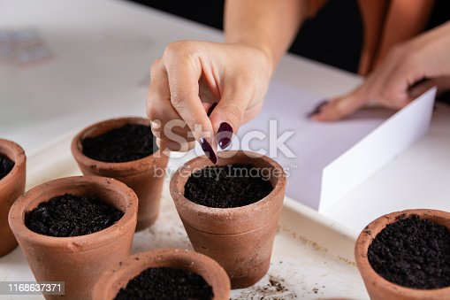 Woman puts little cactus seed from fingers to a terracotta flower pot on the desk. Process of sowing cacti plant from seeds in flower nursery. Close up, selective focus