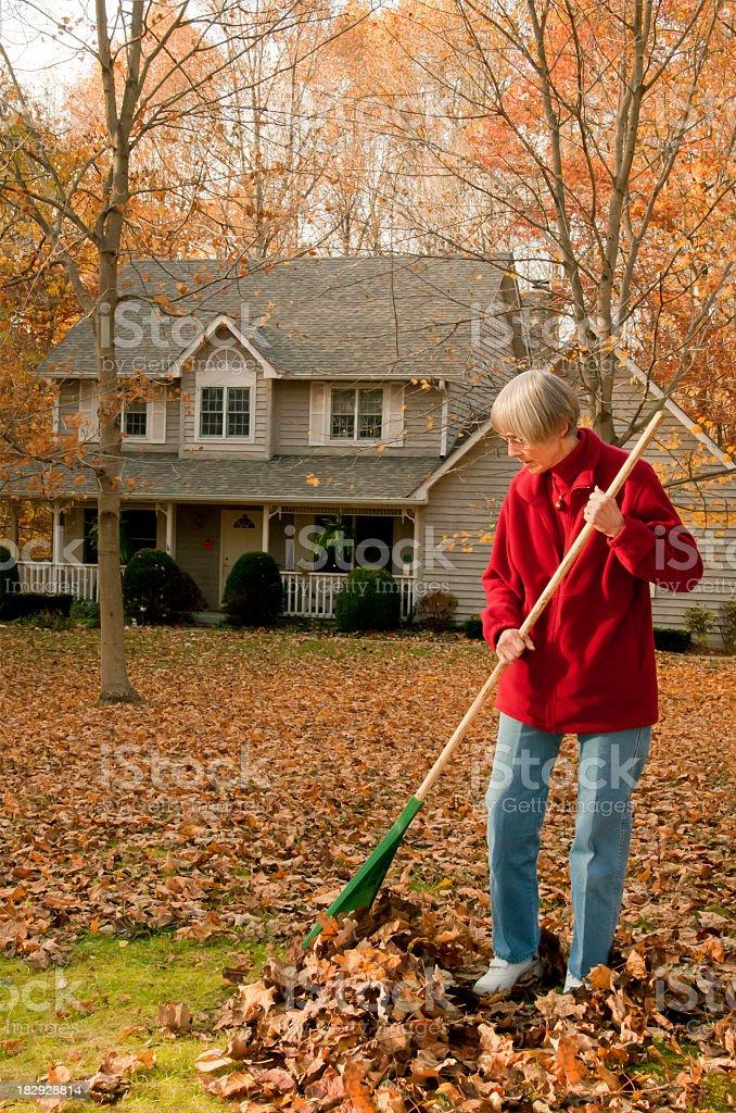 Woman Raking front yard stock photo