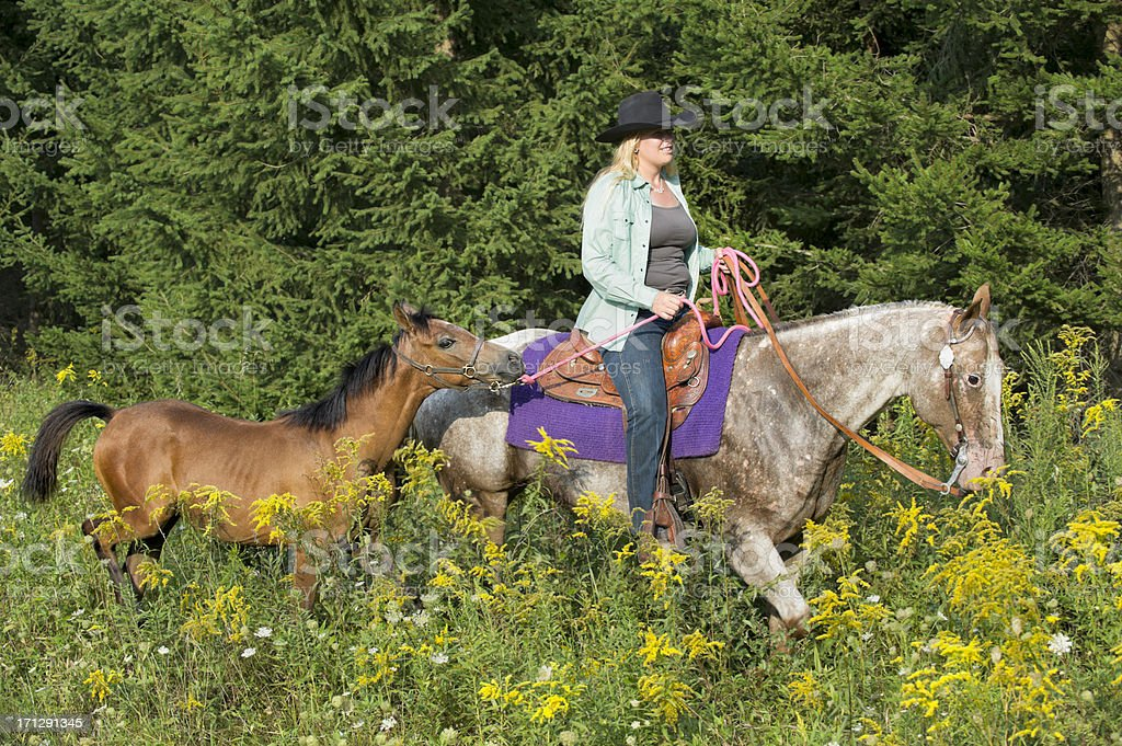 Woman Rancher Horseback Riding Leading Young Foal Through Wildflowers stock photo