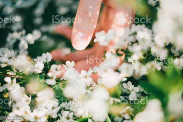 Photo of Woman reaching out for flowers