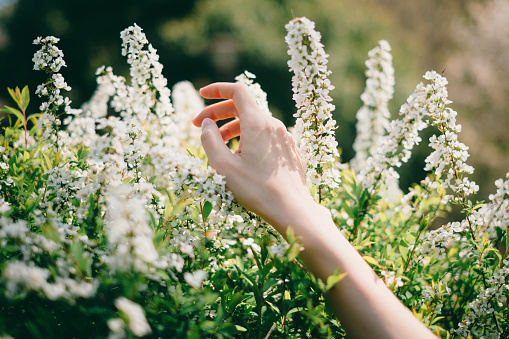 486439381 istock photo Woman reaching out for flowers 1220383464