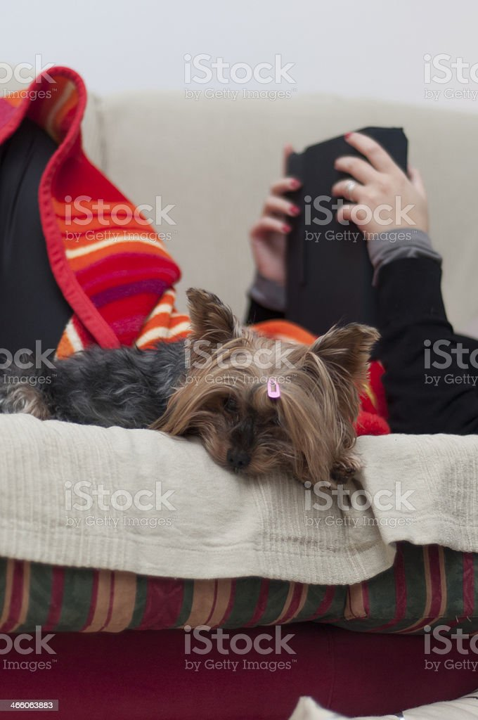 woman reading next her lovely dog royalty-free stock photo