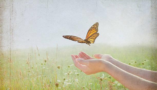 Woman release a monarch butterfly into wildflower field picture id504493522?b=1&k=6&m=504493522&s=612x612&w=0&h=ts8c jckqvpeapt k8tichgzkiisgsbl4kh9nj4jdmw=