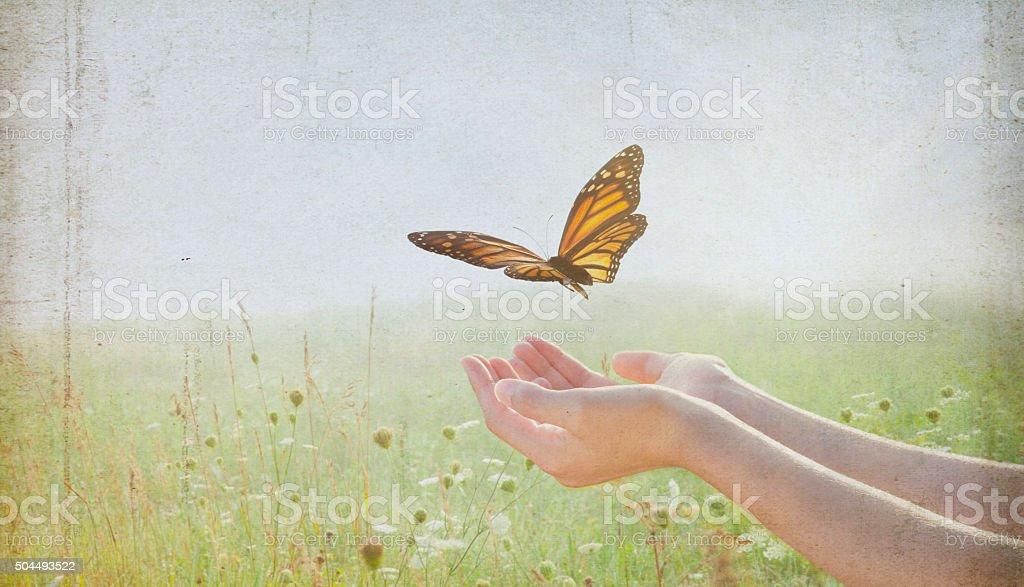 Woman Release a Monarch Butterfly into Wildflower Field stock photo