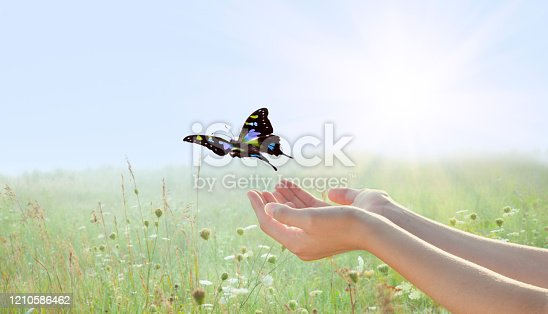 Woman Releasing a Butterfly over Field of Flowers with Setting Sun.
