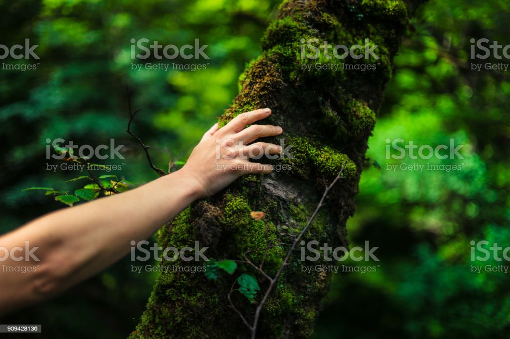 Woman resting her hand on a tree in the forest stock photo