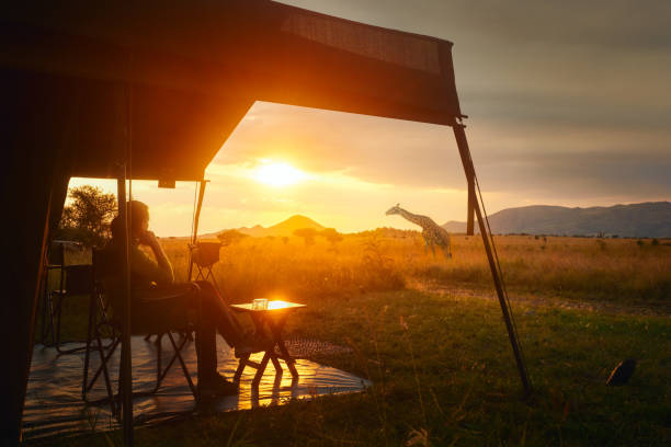 Woman rests after safari in luxury tent during sunset camping in African savannah of Serengeti National Park,Tanzania. stock photo
