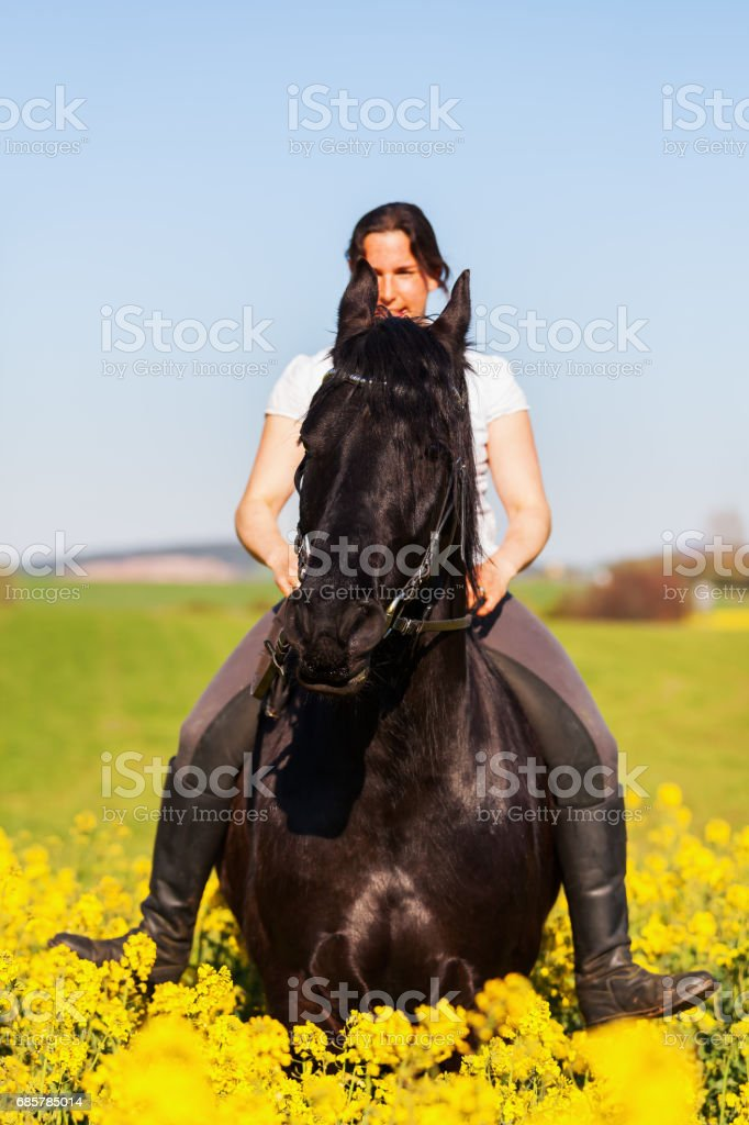 woman rides on a black Friesian horse royalty-free stock photo