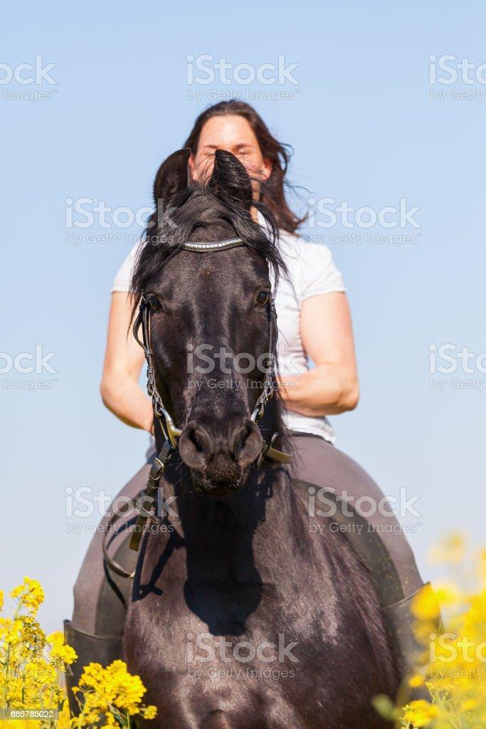 woman rides on a black Friesian horse foto de stock libre de derechos