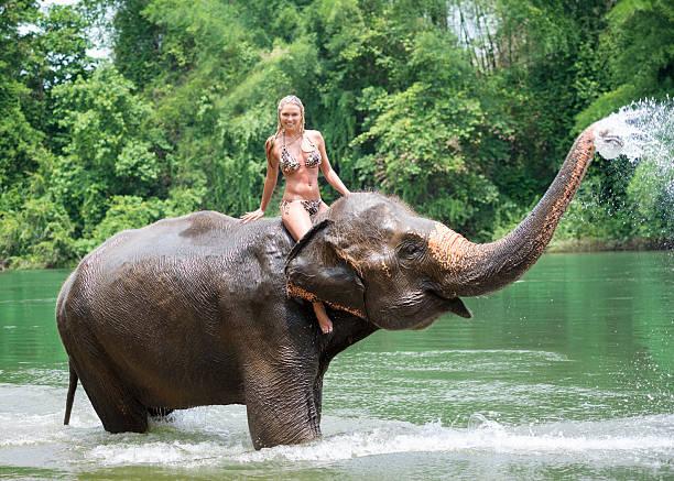 女性の乗馬では、象、トロピカルレインフォレスト - 野生動物旅行 ストックフォトと画像