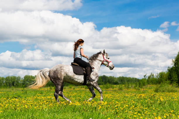 Woman riding on grey horse in the field picture id949800654?b=1&k=6&m=949800654&s=612x612&w=0&h=rn0vyhofr0gjyl6k37wcuh e9ofwqospmmovynwwkvu=