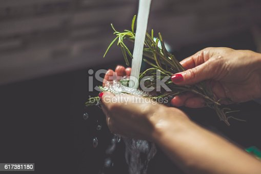 Fresh garden herbs. Rosemary. Isolated on white background