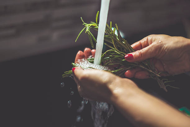 Woman rinsing rosemary in the kitchen stock photo