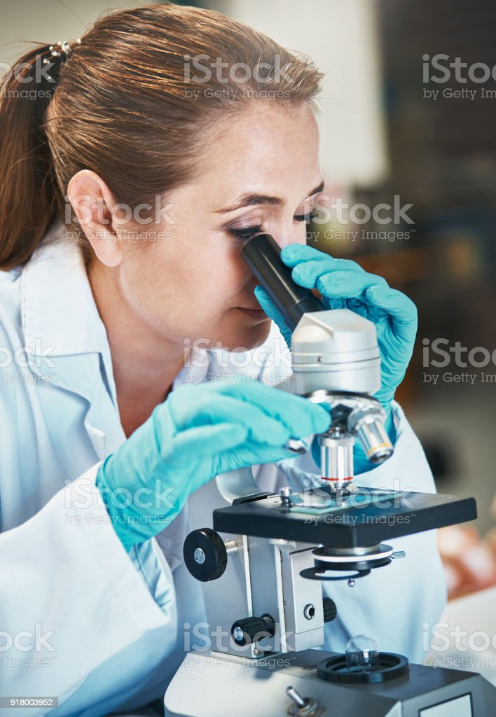 Woman scientist adjusts lens on microscope she is using stock photo