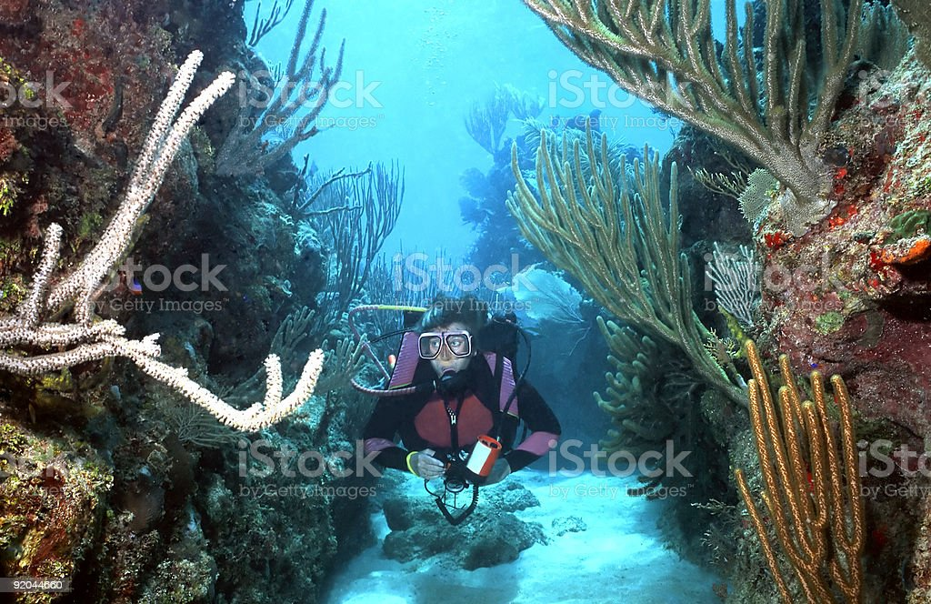 Woman Scuba diver in Roatan stock photo