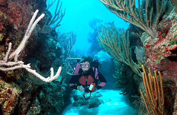 Woman Scuba diver in Roatan  roatan stock pictures, royalty-free photos & images