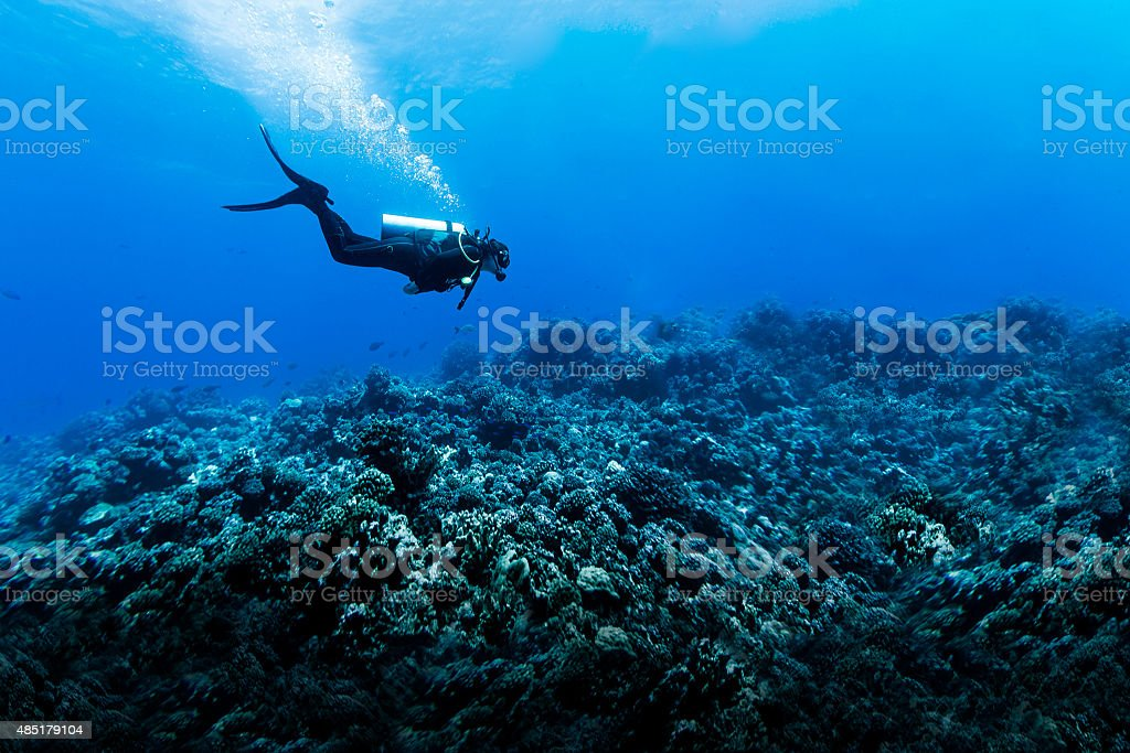 Woman Scuba Diving Over Huge Reef in Rangiroa, French Polynesia stock photo