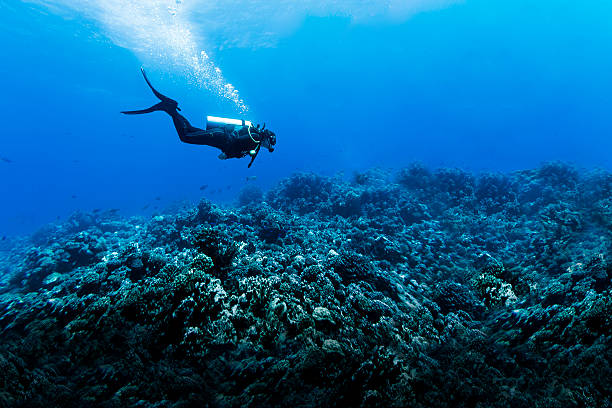 woman scuba diving over huge reef in rangiroa, french polynesia - underwater diving stock photos and pictures