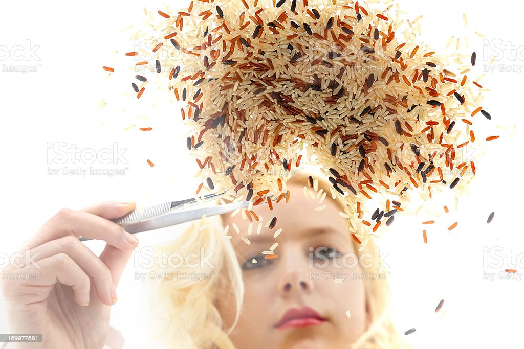 Woman selecting geneticly modified rice with tweezers royalty-free stock photo