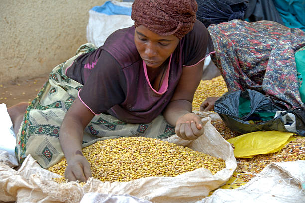 Woman selling beans and picking out the bad ones. stock photo