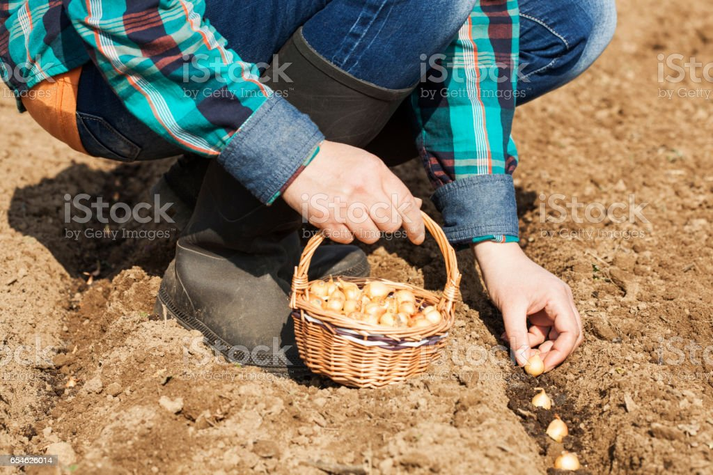 Woman sets onion stock photo