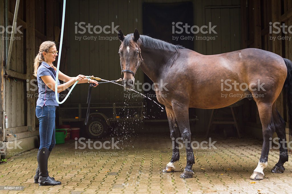 Woman showering her horse stock photo