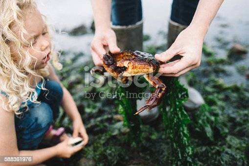 A mother shows her toddler aged girl a freshly caught crab, the girl looking on in awe.  One of many things to discover while exploring a Pacific Northwest beach on the Puget Sound in Washington state.  Horizontal image.