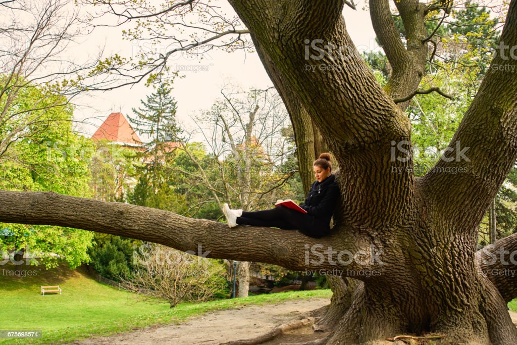 A woman sits up in a tree. royalty-free stock photo