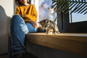Young woman sitting on window sill on sunny day while little kitten playing next to her on wooden sill