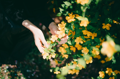 486439381 istock photo Woman sitting surrounded by flowers 1220367065