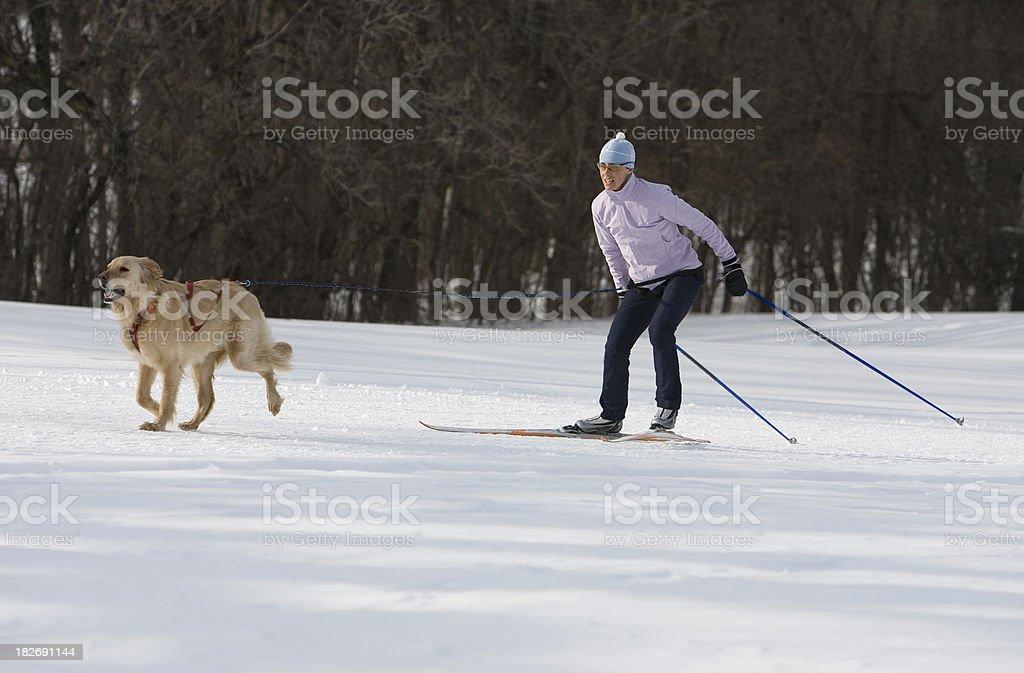 Woman Skijoring stock photo