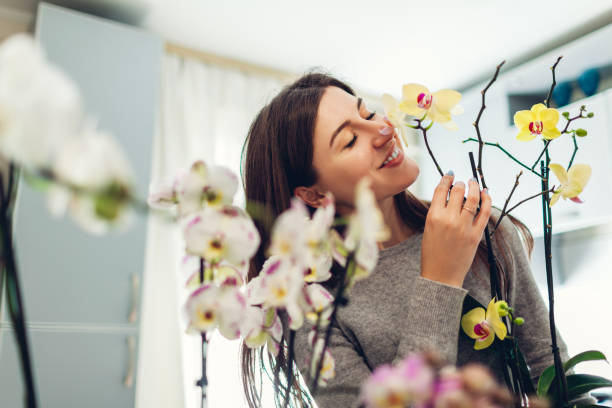 woman smelling her orchids on kitchen. housewife taking care of home plants and flowers. - orchidea foto e immagini stock