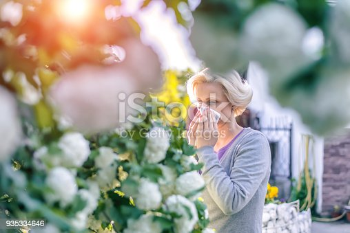 istock Woman sneezing in the blossoming garden 935334646