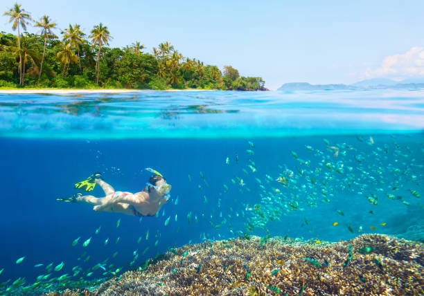 Woman snorkeling in clear tropical waters. Young woman swimming above bright coral reef in the sea on a background of a tropical beach sulawesi stock pictures, royalty-free photos & images