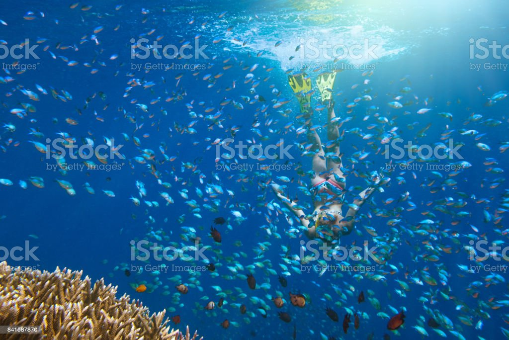 woman snorkeling over coral reef surrounded by multitude of fish stock photo